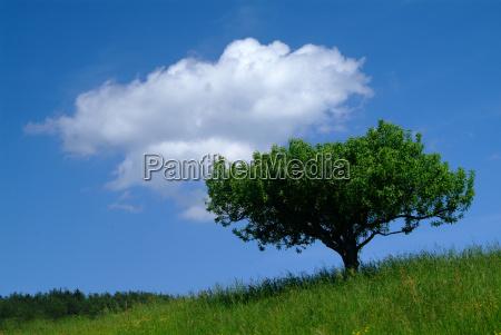 niebieski drzewo drzewa zielony drewno drewna