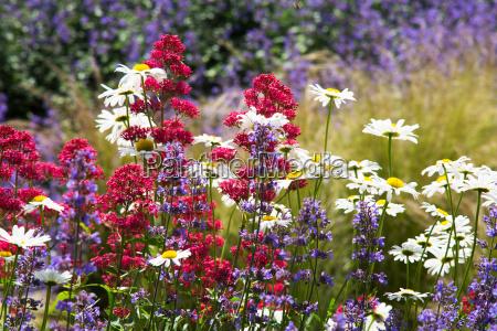 kwiat kwiatek zawod roslina lato letni