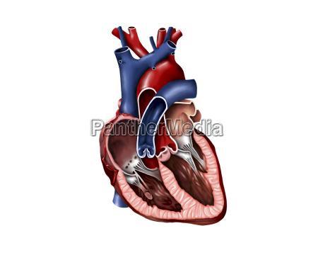 medycznych medycyna lekarski lekarskie medyczny ilustracja