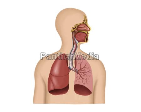 medycznych medycyna lekarski lekarskie medyczny piers