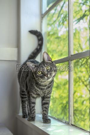 okno szyby okno dachowe lufcik zwierzeta